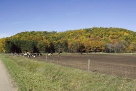 Horse Shoe Bluff Pictures