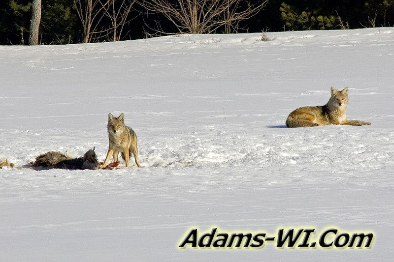 Adams County Wildlife