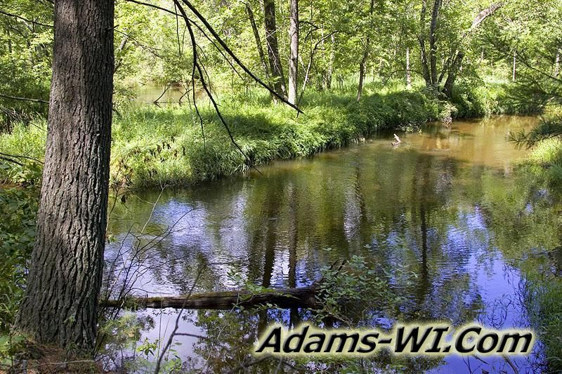 Photo of Big Roche-a-Cri Creek running through the woods of Big Flats Township, WI.