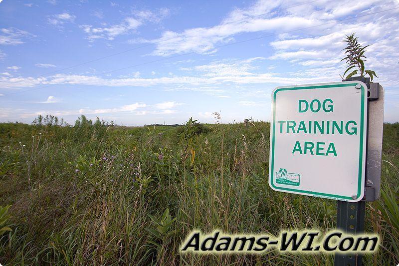 Camelot Dog Training